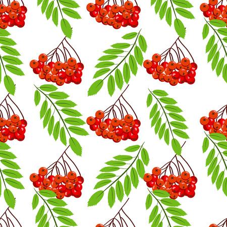 rowanberry: Autumn season fruit. Illustration