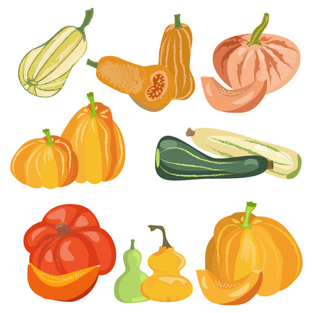 Vector illustration set pumpkins collection nature food day harvest thanksgiving. Autumn season set vegetable with pumpkin isolated on white background.