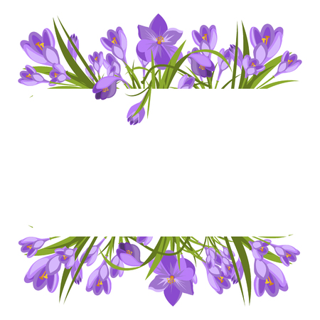 Purple crocuses in the snow vector. Spring violet crocuses on white. Floral nature spring illustration crocus flower. Spring crocus flower. Greeting easter card crocus flower. Beautiful crocus flower Ilustrace