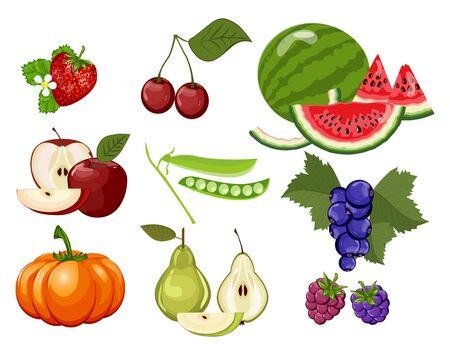 Vector apple, pumpkin, sweet cherry, cherry, currant, green pea, grape, watermelon, pear, apple.