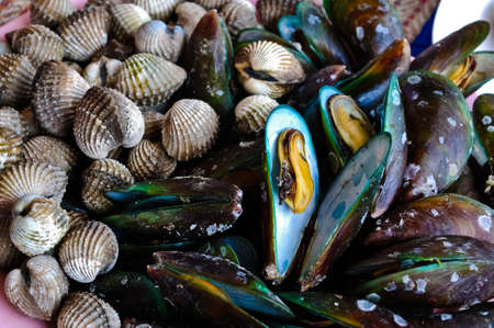 mussels & cockles for dinner Stock Photo - 11688709