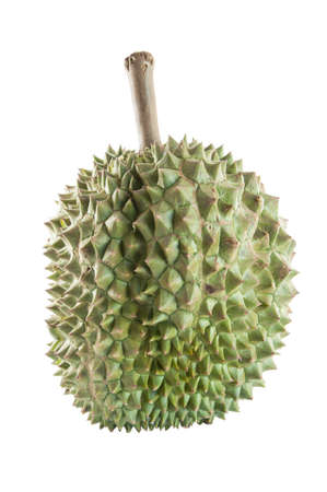 king of thailand: Durian, king of fruit from Thailand isolated on white background Stock Photo