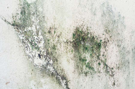 Old concrete wall covered with moss mold Stock Photo