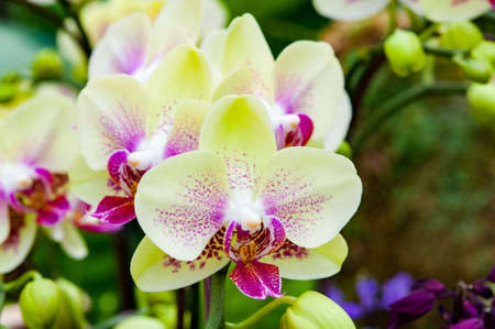 close up: Close up yellow orchid Stock Photo