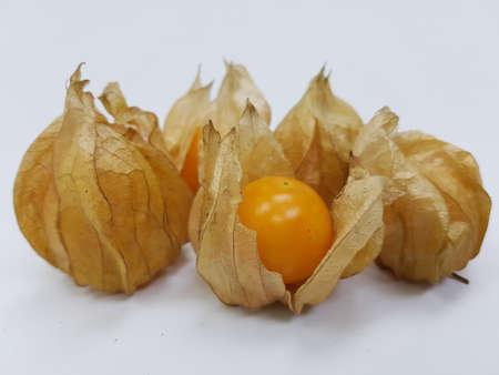 Cape aculeata