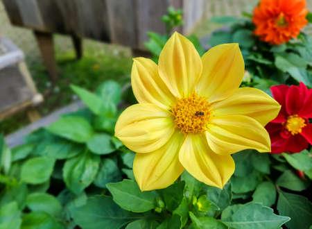 Fiore giallo nel giardino