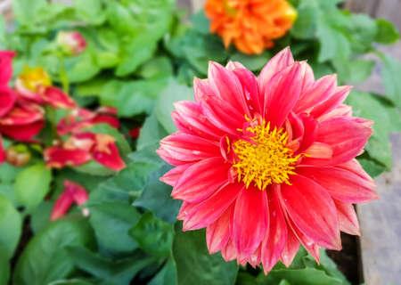 Fiore rosso nel giardino