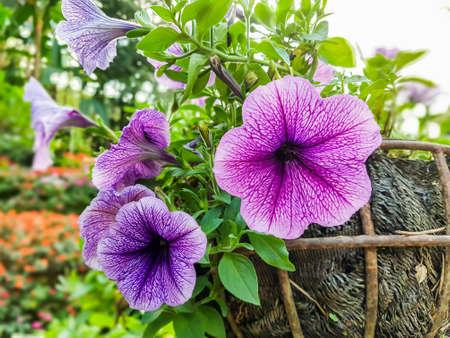 Fiore viola nel cestino