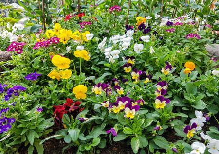 Bel fiore nel giardino
