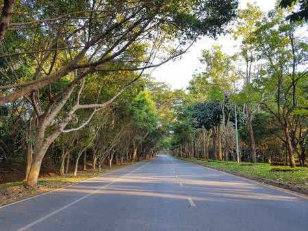 Strada asfaltata e fila di alberi nel parco