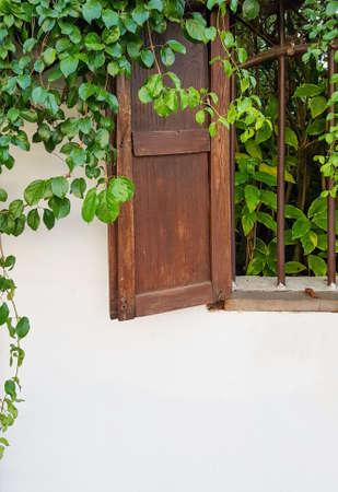 Verdi foglie di edera coperta vecchia finestra di legno e pareti Archivio Fotografico