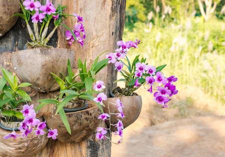 Fiore rosa orchidea Archivio Fotografico