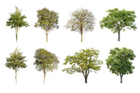 Set di albero isolato su sfondo bianco