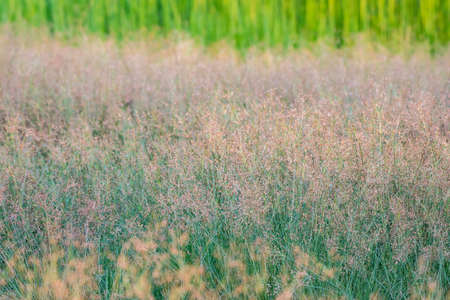 View of meadow background