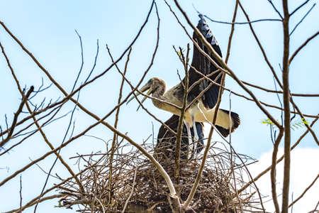 Painted stork bird standing on nest