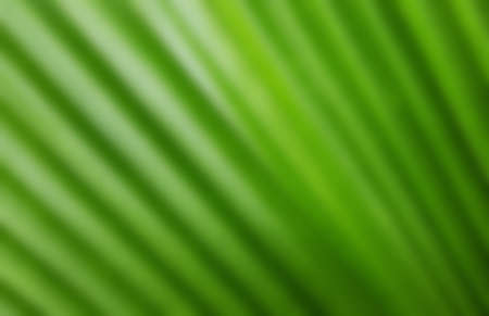 Abstract blur of green leaf for background Stock Photo