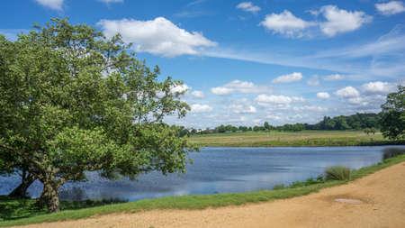 A landscape view of Richmond park on a sunny day