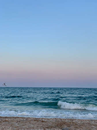 Very beautiful sunset with blue sky and bird on the beach