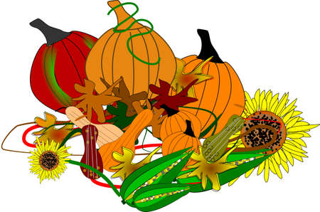 pumpkin seeds: assorted pumpkins sunflowers squash and corn on white feast for the fall