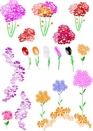 Assortiment floral sur fond blanc Banque d'images - 9595619