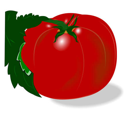 tomatoe over white with stem  Vector