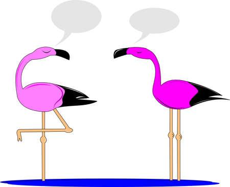 flamingos chatting over white cartoon