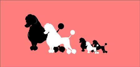 poodle family over pink Illustration