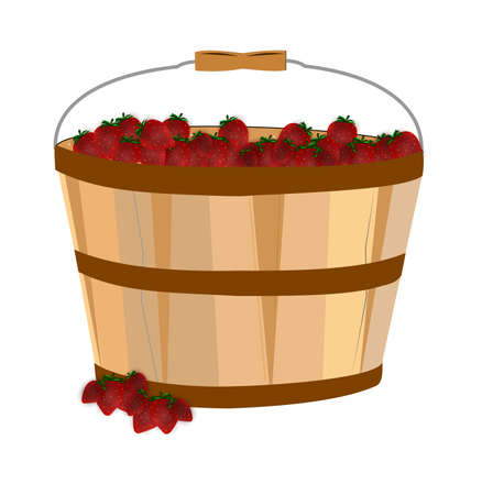 basket full of ripe strawberries  Vector