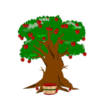 apple harvest time with tree and basket  Vector