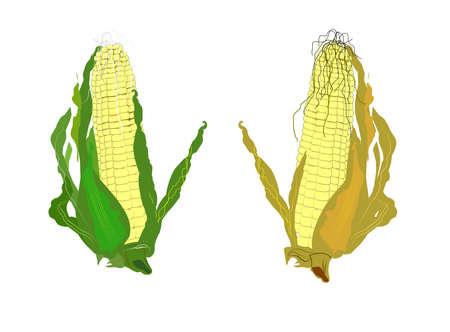 husks: corn on the cob clip art