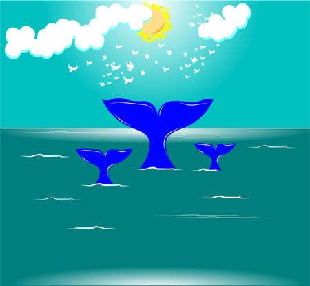 baleine bleue: rorqual bleu fond