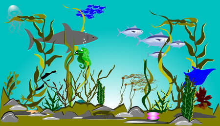 alga marina: Sealife Foto de archivo