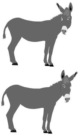 cousin: donkeys