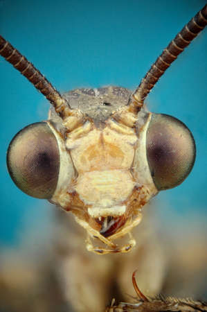 micrograph: Micrograph of the head of a lion ant made with the technique of stacking
