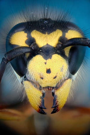 micrograph: Micrograph of the head of a wasp made with the technique of stacking