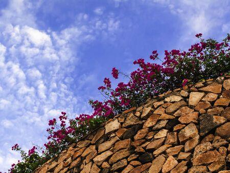amat: Stone Wall with Flowers  Wong Amat Beach, Pattaya