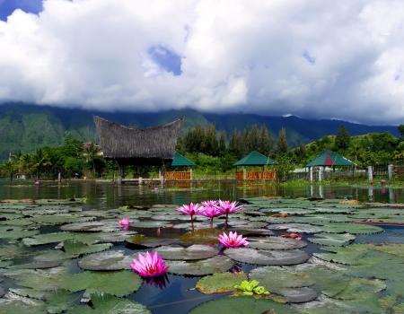 Lotuses and Mountain. Samosir Island  Lake Toba  North Sumatra  Indonesia. Imagens