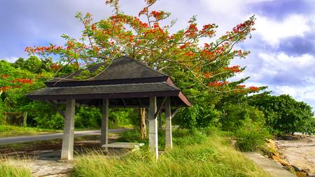 aonang: Gazebo on Road and Flamboyan Tree. Krabi Province Beach, Thailand