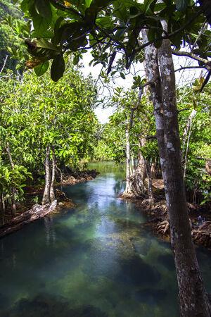aonang: Water Way. Pa Phru Tha Pom Klong Song Nam Nature Trail. Krabi Province of Thailand.