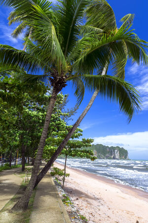 aonang: Palm Trees on Shore in Krabi Province, Thailand Stock Photo