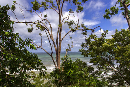 phangnga: Trees on Shore in Krabi Province, Thailand