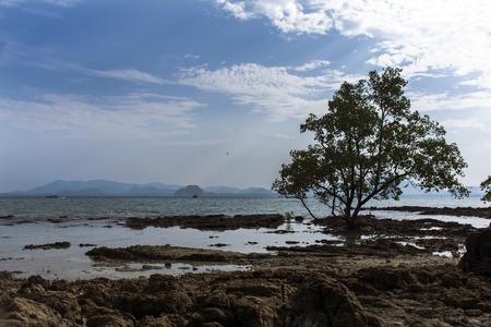 mook: Mangrove Tree in Koh Mook Island Coast Line.