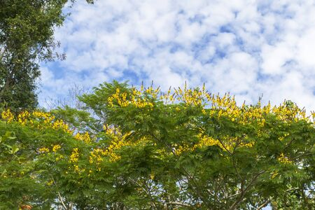 Sky and Flowers in Koh Mook Island Coast Line. Stock Photo