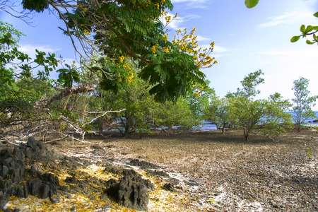 mook: Mangrove Trees in Koh Mook Island Coast Line.