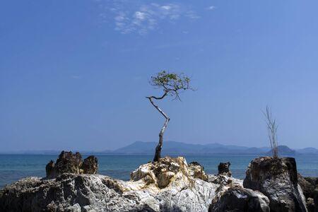 mook: Koh Mook Island Coast Line, Tree. Trang Province