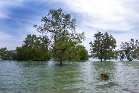 mook: Koh Mook Island Mangroves in Trang Province