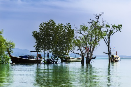 Koh Mook Island Coast Line. Boats in Mangroves Trees Stock Photo