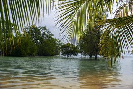 Mangrove and Palm Trees in Koh Mook Island Coast Line. Stock Photo