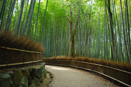 the sides: A path with dense bamboo groves on both sides
