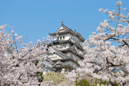 Cherry blossoms in full bloom in spring at the Himeji castle, Japan